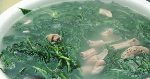 苦菜小肠汤