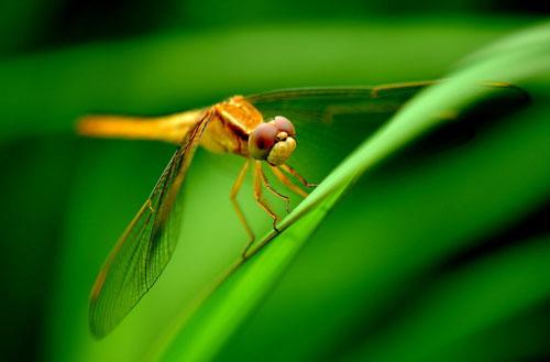 野外求生 紧急情况下一些可食用昆虫