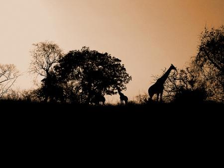 观赏野生动物