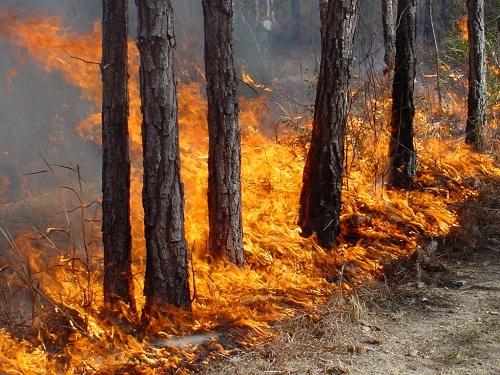 遭遇火灾如何求生