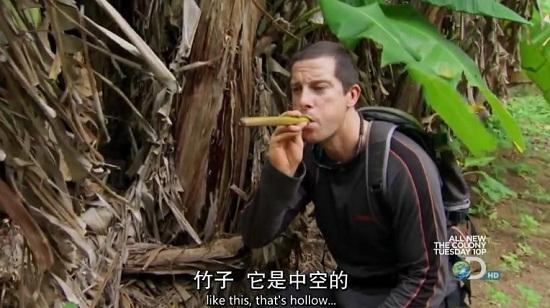 荒野求生技巧之利用香蕉树获取水源