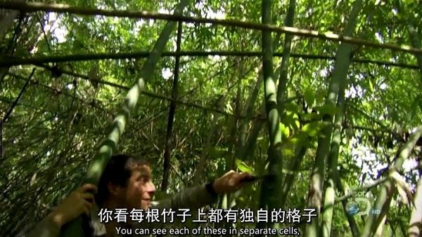 野外求生—竹子取水
