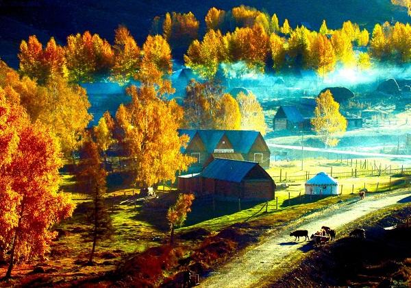 喀纳斯图瓦村 斑斓秋色流连处