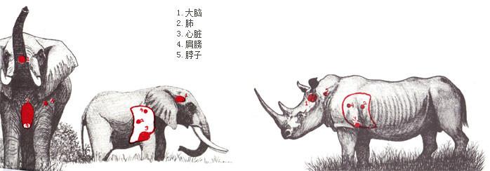 动物要害部位(图解)