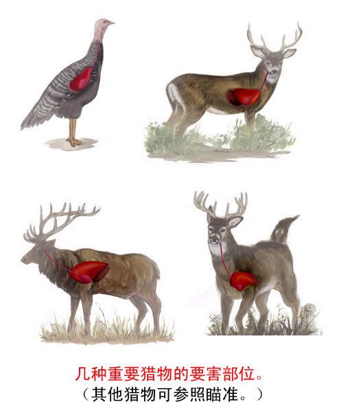 动物要害部位