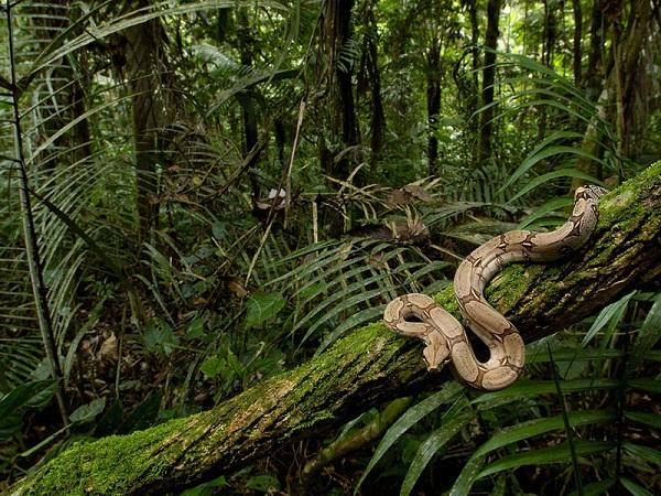 野外求生必知的丛林法则