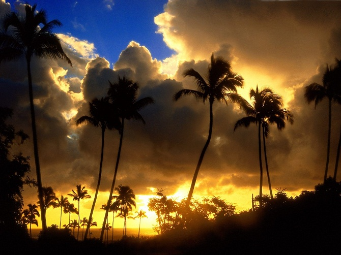 palm_trees_in_hawaii_sunset