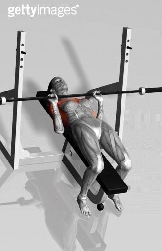 健身房身体各部位肌肉线条训练动作图示