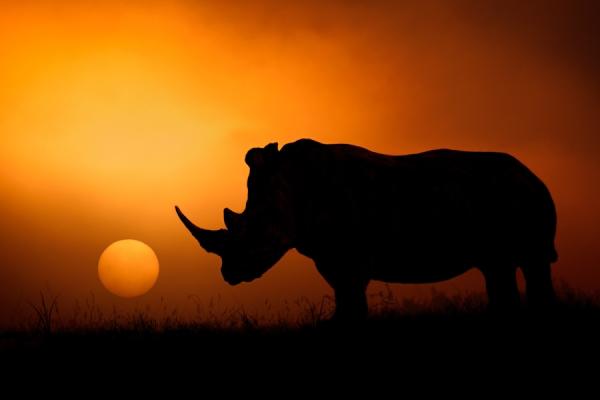用唯美的构成看野性非洲