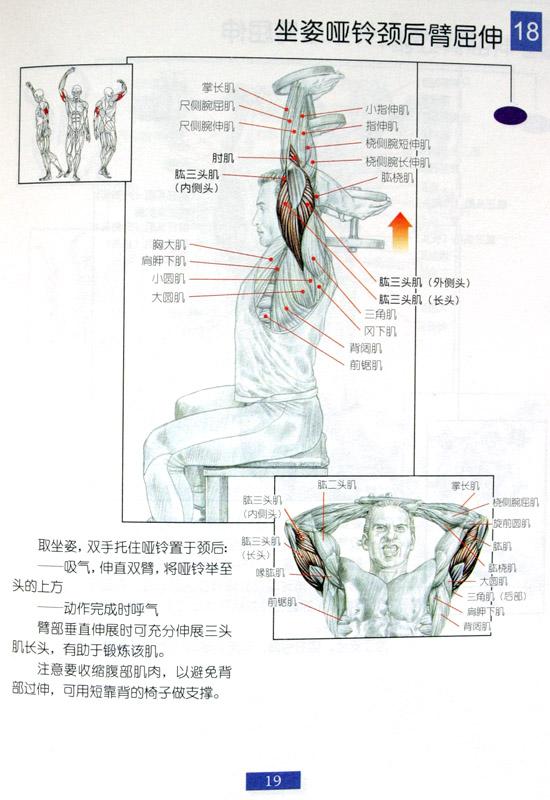 坐姿颈后臂屈伸