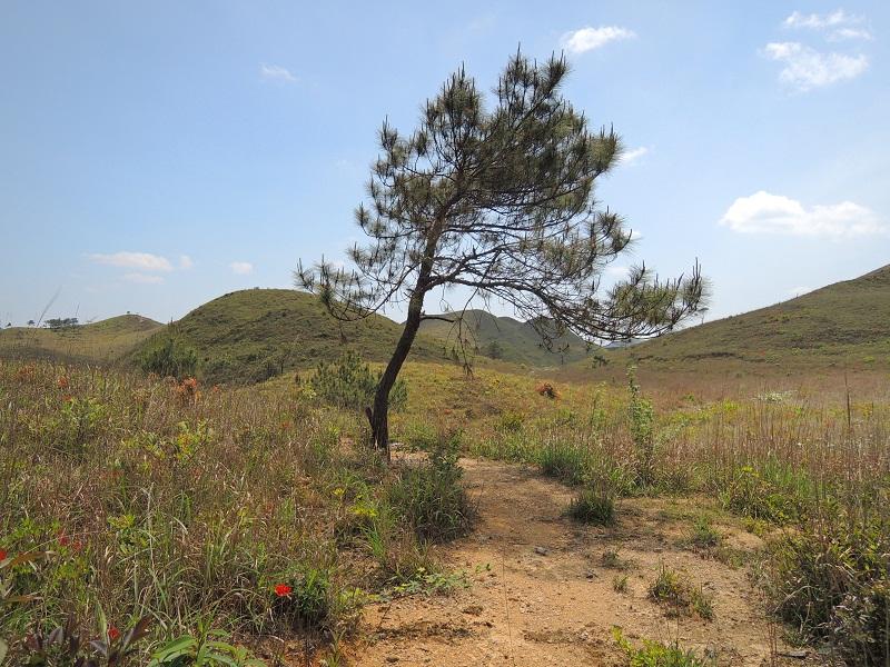 麒麟山 小树