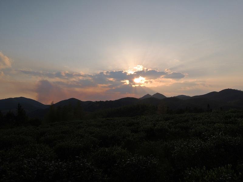 麒麟山高山茶场