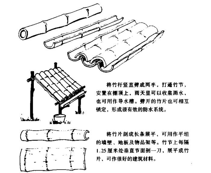 野外求生竹子建造庇护所