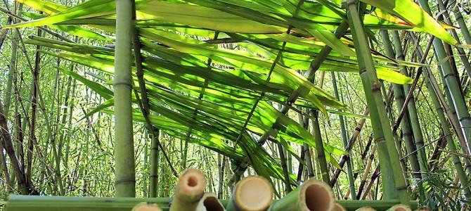 野外求生利用竹子搭建庇护所