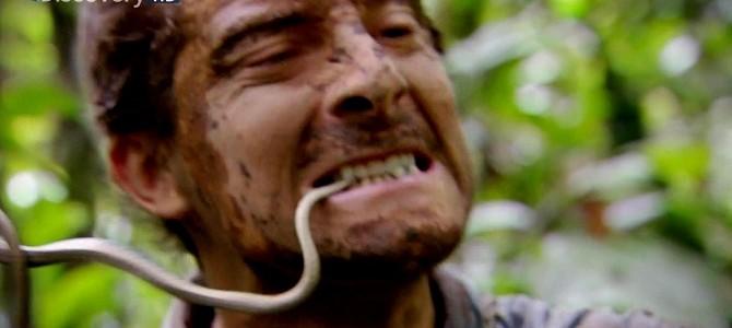 荒野求生贝爷生吃蛇肉