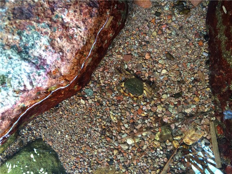 一只死掉的螃蟹 野外求生