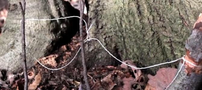 教你怎样制作一个简单的绳套陷阱