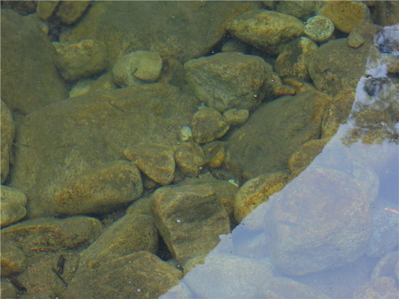 溪水中的鱼儿