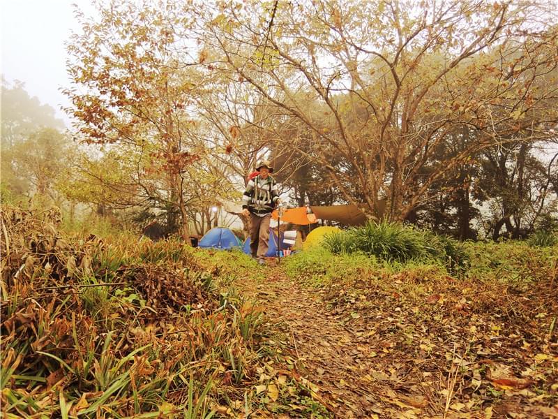 龙门场古银杏林露营