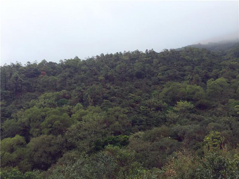 福清南岭镇大姆山草场