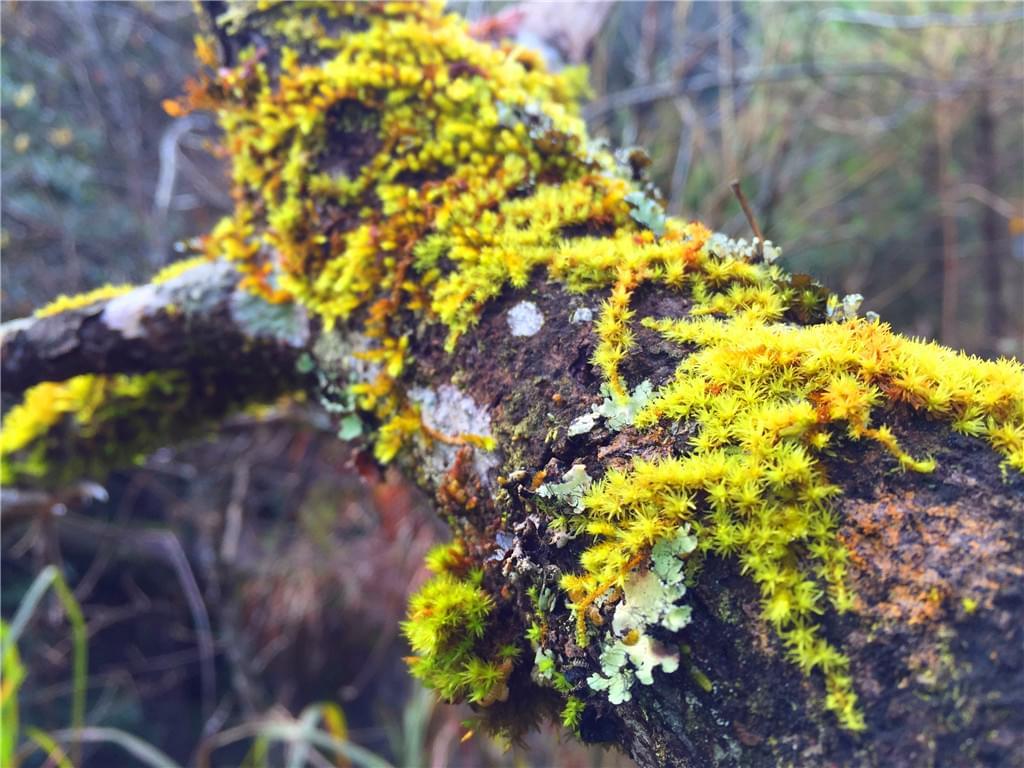 布满苔藓的枯木