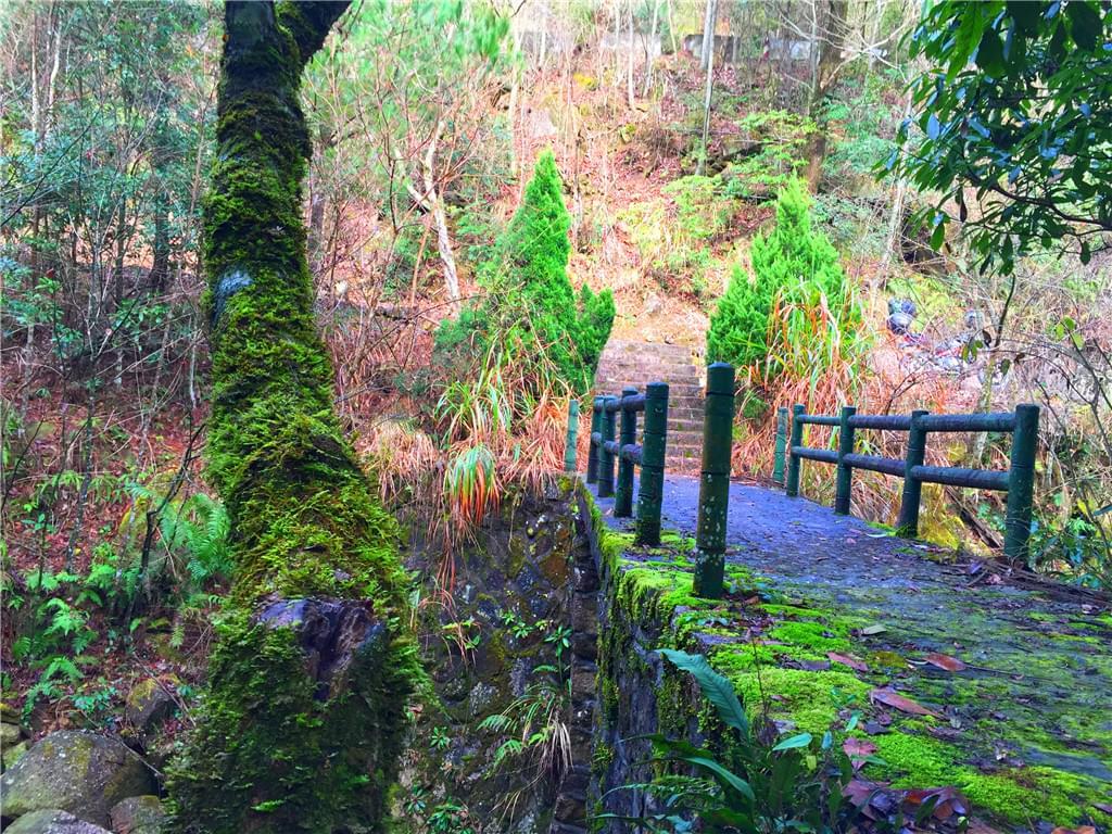 布满苔藓的小桥