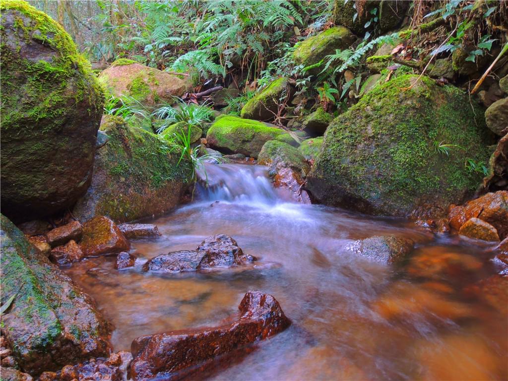 布满苔藓的溪流