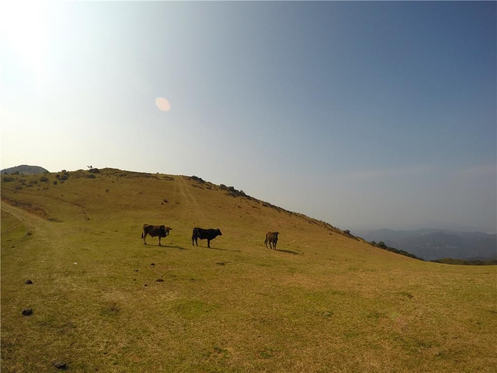 大姆山草场