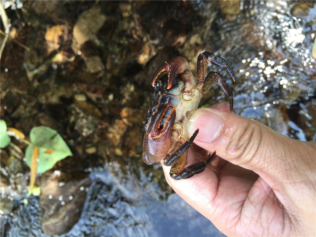 徒手抓螃蟹