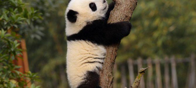 荒野求生徒手爬树技巧