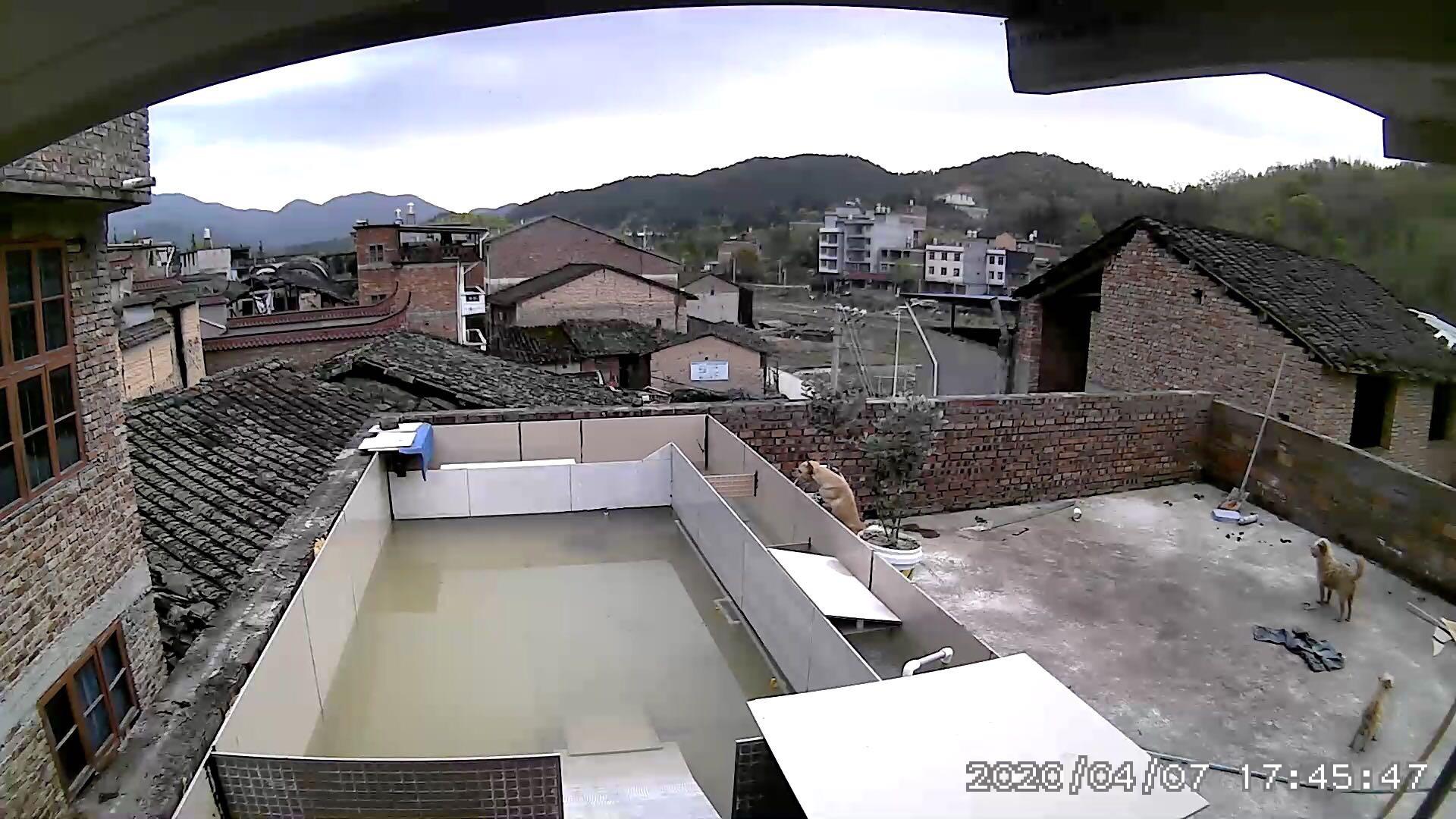 在家建个露天龟池(三)