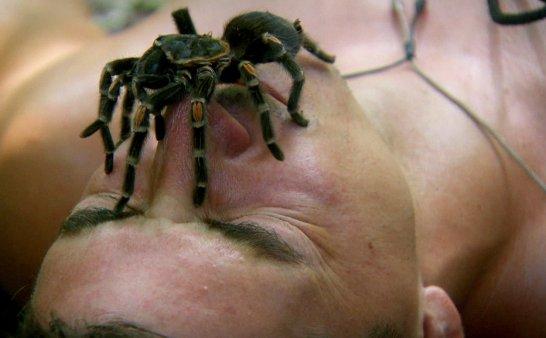 贝尔的勇气特训班:03老鼠与蜘蛛